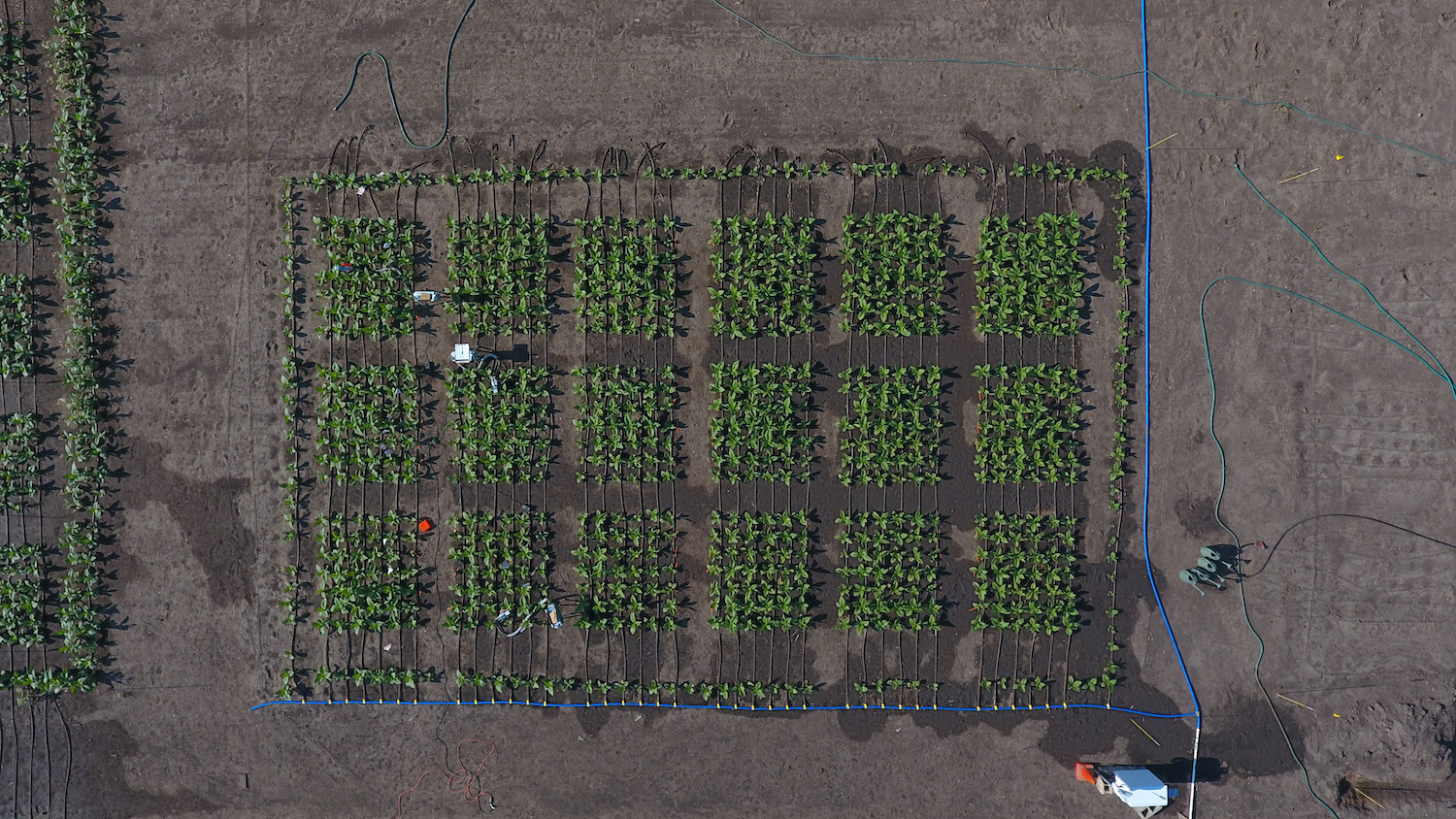 2017 essex field trials aerial