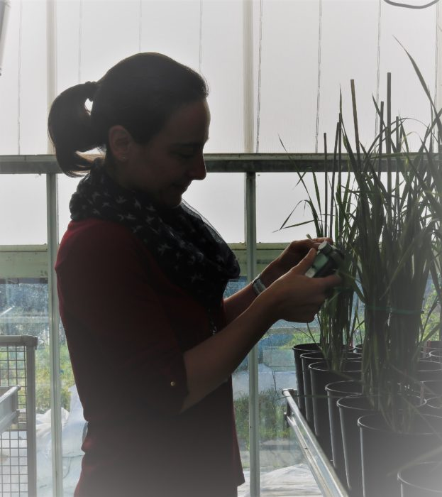 Elizabete Carmo-Silva working in the greenhouse