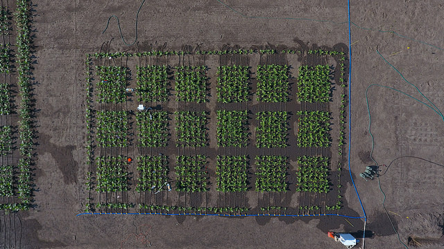 Aerial view of field trial.