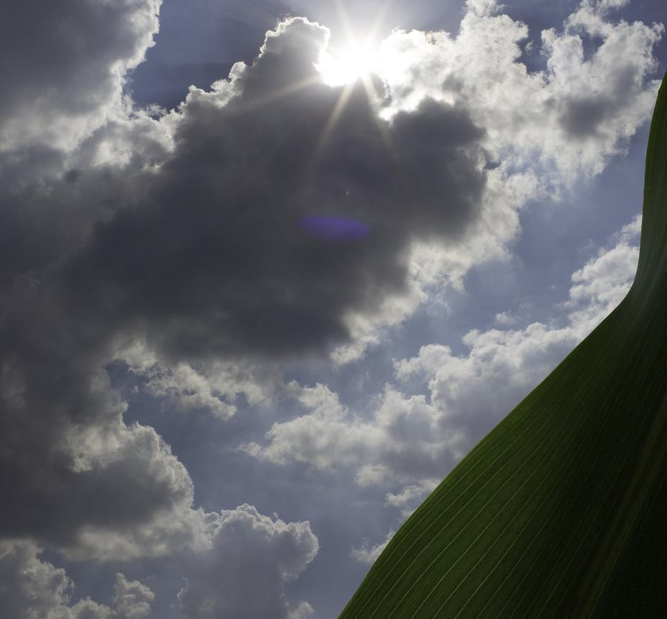 Leaf juxtaposed against sun and clouds