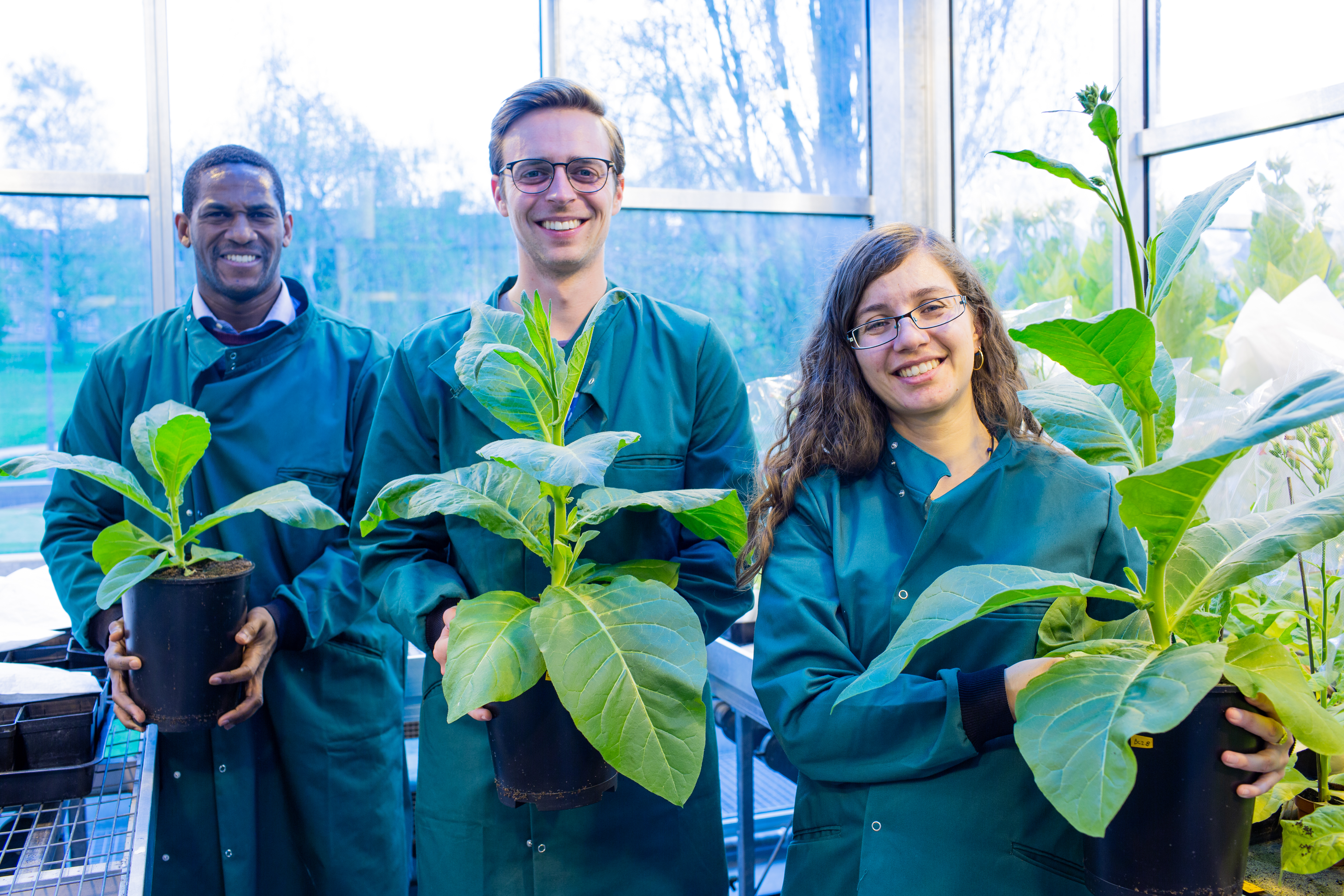 Ressearch team holds plants without the modiciation, with one modification and double modifications to illustrate the resulting difference in size..