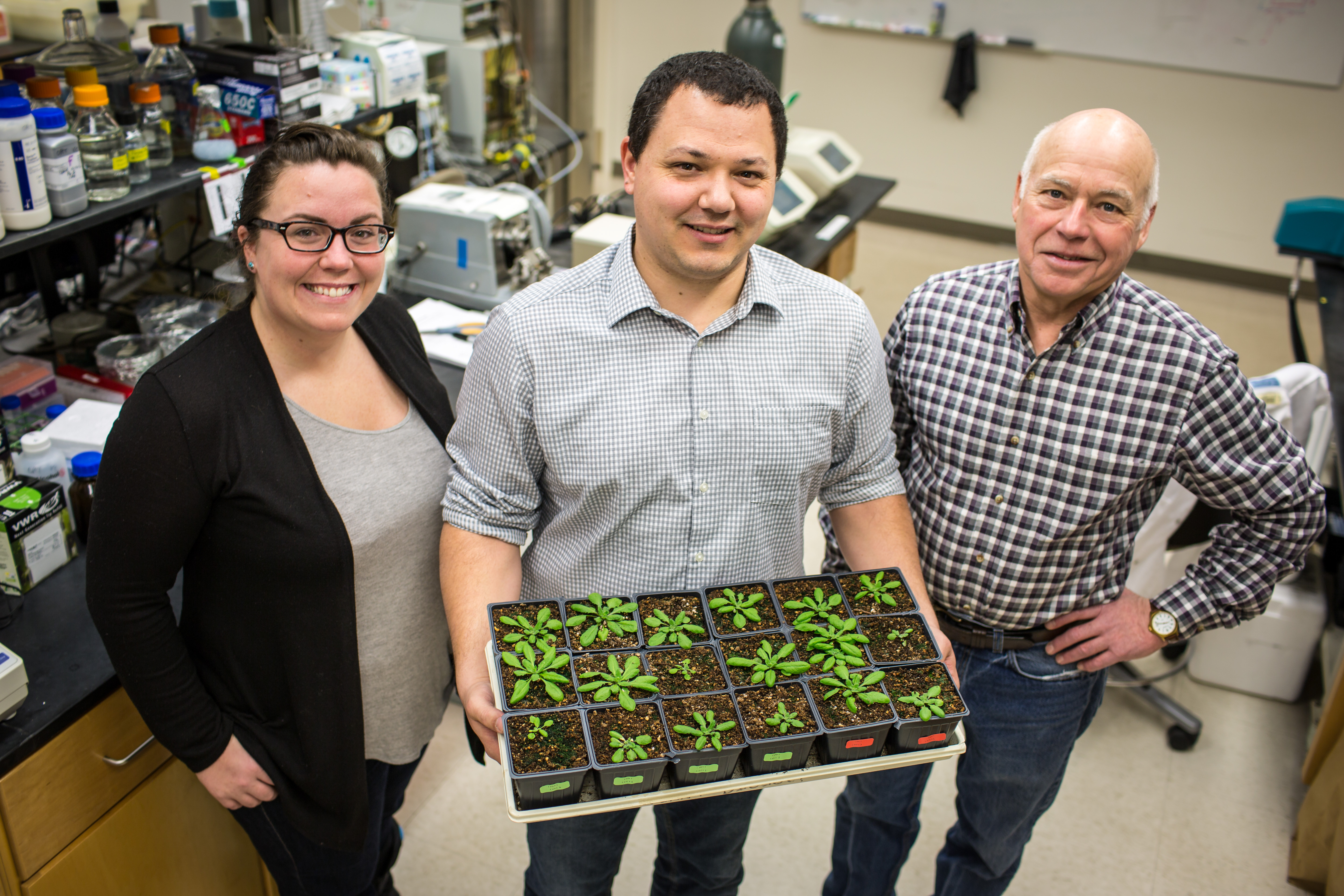 Three researchers pose in the lab with a tray of Arabidopsis.