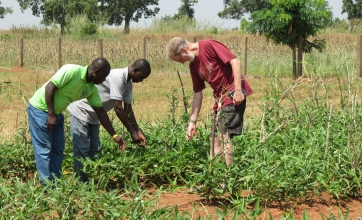 Cowpea protected from a devastating pest, free for smallholder African farmers