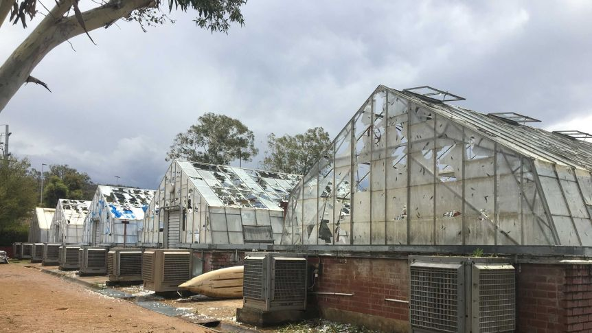 Picture of CSIRO glasshouses destroyed by hail.