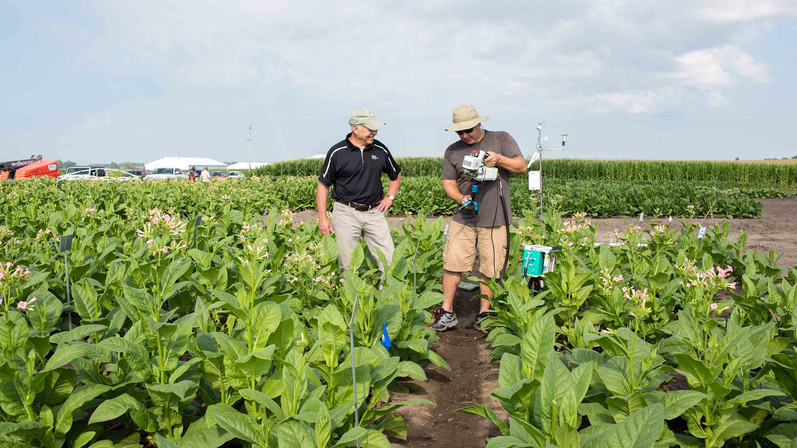 Don Ort and Paul South stand in tobacco field trial.