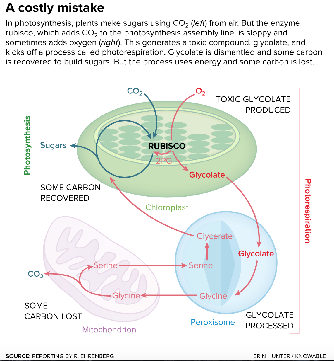 The photosynthesis fix | RIPE