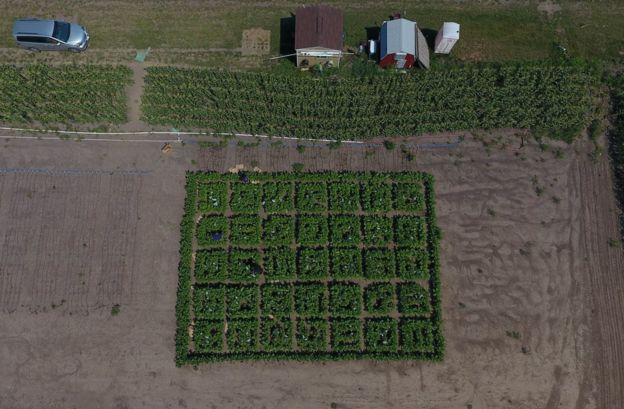 Aerial view of 2017 field trials.