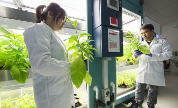 Researchers hold tobacco plants next to growth chambers.