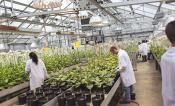 Researchers work in the greenhouse