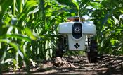 TerraSentia robot sits in front a corn field.