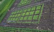 Aerial picture of field trial.