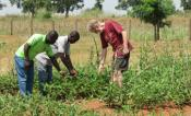 TJ Higgins working with cowpea breeders in Africa