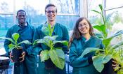 Three scientists hold plants that are unmodified, have one modification, and that have two modifications.